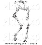Clip Art of an Old Fashioned Vintage Horse Anatomy of Hinder Part Bones in Black and White by Picsburg