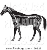 Clip Art of an Old Fashioned Vintage Horse Anatomy of the Nervous System in Black and White by Picsburg