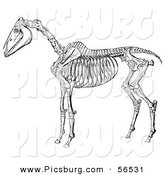 Clip Art of an Old Fashioned Vintage Horse Anatomy of the Skeleton in Black and White 2 by Picsburg