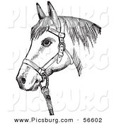 Clip Art of an Old Fashioned Vintage Horse with Good Form for a Halter of in Black and White by Picsburg