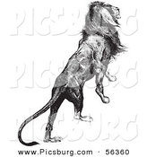 Clip Art of an Old Fashioned Vintage Majestic Lion Black and White by Picsburg