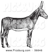 Clip Art of an Old Fashioned Vintage Poitou Donkey Ass in Black and White by Picsburg