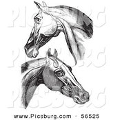 Clip Art of Horse Head and Neck Muscles - Black and White by Picsburg