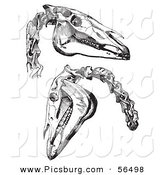 Clip Art of Two Horse Skulls and Neck Bones - Black and White by Picsburg