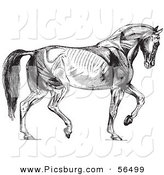 Clip Art of Walking Horse Muscles - Black and White by Picsburg