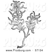 Vector Clip Art of a Black and White Aromatic Culinary Herbal Rosemary Plant by Picsburg