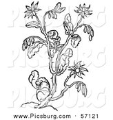 Vector Clip Art of a Black and White Herbal Borage Plant by Picsburg