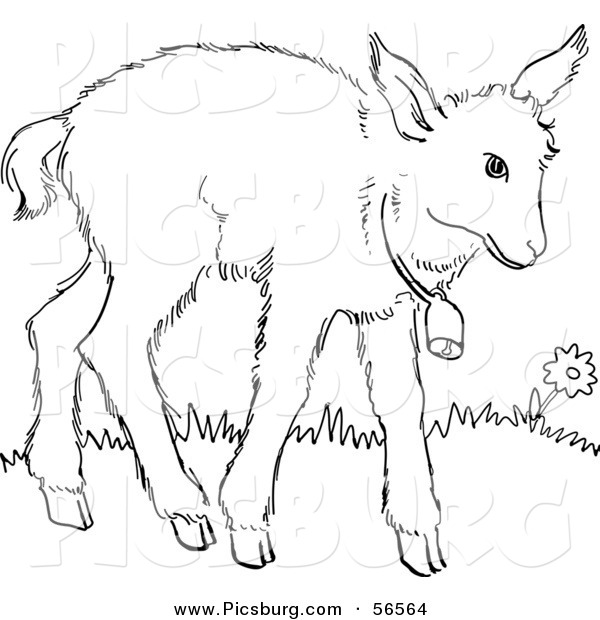 Clip Art of a Baby Goat Wearing a Bell - Black and White Line Art