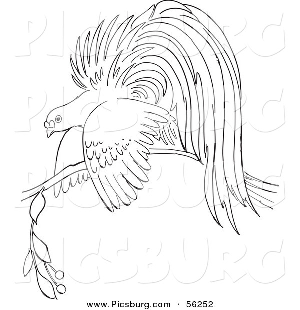 Clip Art of a Bird of Paradise on a Branch - Black and White Line Art