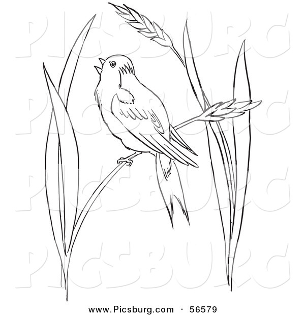 Clip Art of a Bobolink Bird Chirping on Wheat Grass - Black and White Line Art