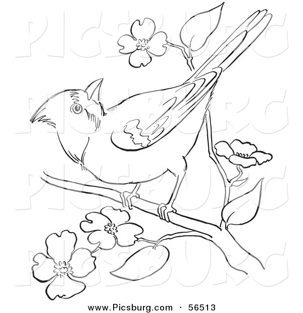 Clip Art of a Cardinal Bird on a Blossoming Tree Branch - Black and White Line Art