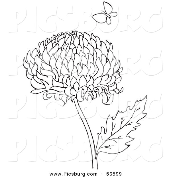 Clip Art of a Coloring Page of a Chrysanthemum Flower and Butterfly