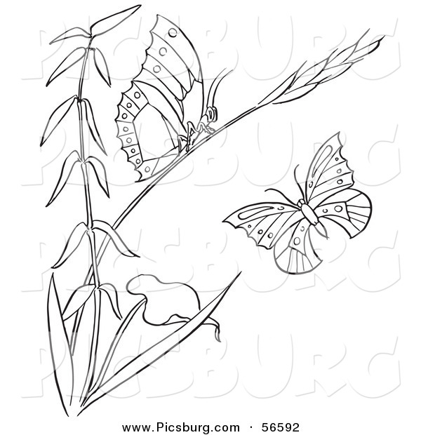 Clip Art of a Coloring Page of a Plant with Butterflies