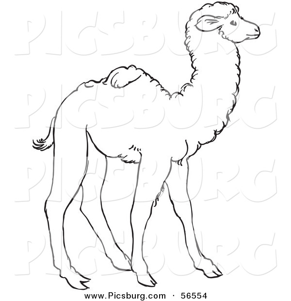 Clip Art of a Cute Baby Camel Standing - Black and White Line Art