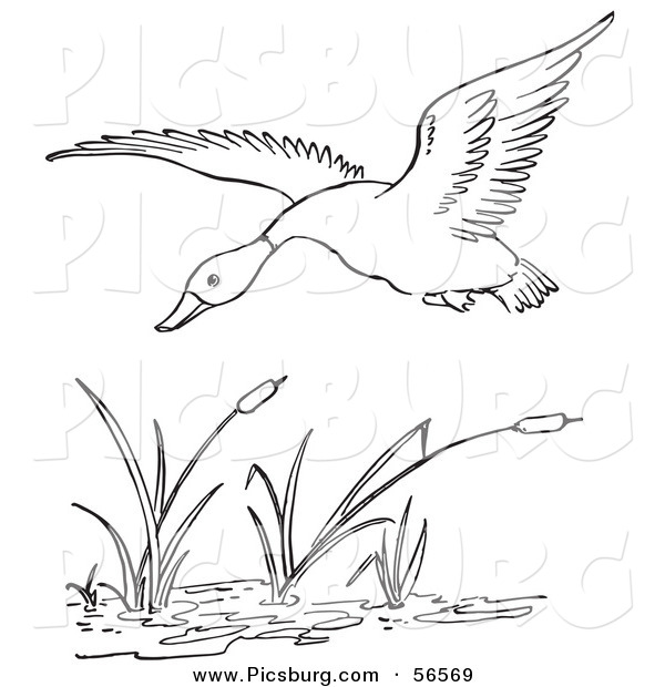Clip Art of a Duck Flying over a Pond - Black and White Line Art