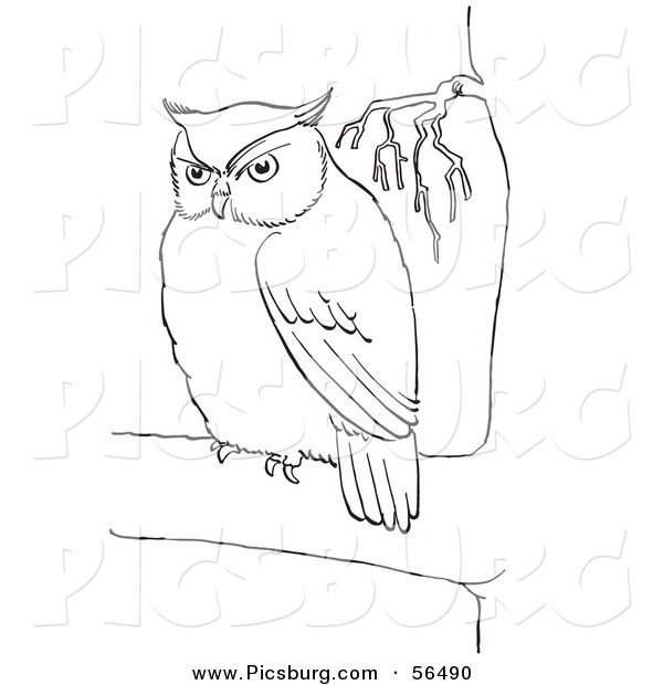 Clip Art of a Fat Owl in a Tree - Black and White Line Art