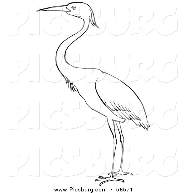 Clip Art of a Heron Bird Standing on Ground - Black and White Line Art