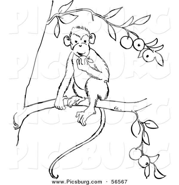 Clip Art of a Monkey Eating Fruit out of a Tree - Black and White Line Art