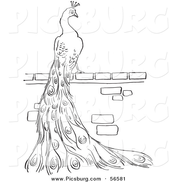 Clip Art of a Peacock Standing on a Brick Wall - Black and White Line Art