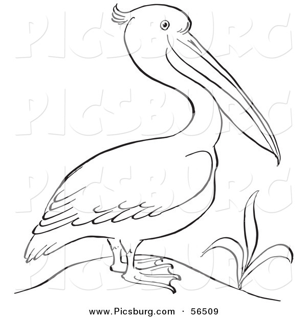 Clip Art of a Pelican Standing Beside a Plant - Black and White Line Art