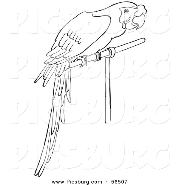 Clip Art of a Perched Parrot in a Caged Environment - Black and White Line Art