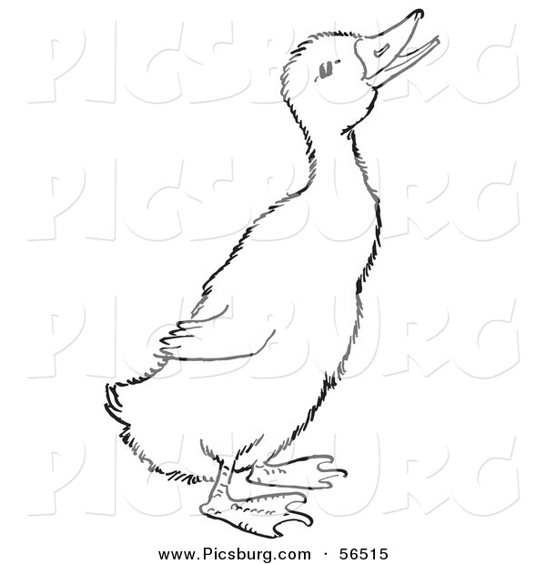 Clip Art of a Quaking Duckling on Ground - Black and White Line Art