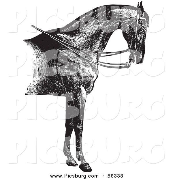 Clip Art of a Reined Horse with Good Strong Shoulders - Black and White Vector Graphic