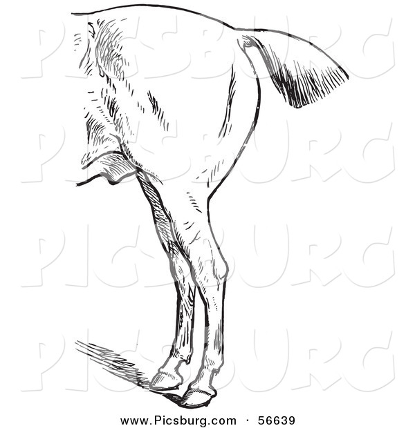 Clip Art of a Retro Old Fashioned Engraved Horse Anatomy of Bad Hind Quarters in Black and White