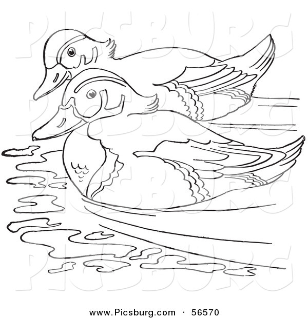 Clip Art of a Wood Duck Couple Swimming in a Pond - Black and White Line Art