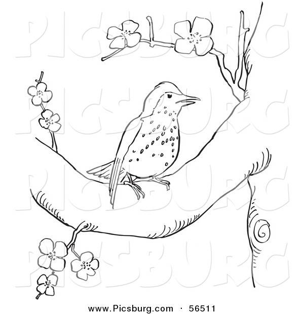 Clip Art of a Wood Thrush Resting in a Blossoming Tree - Black and White Line Art