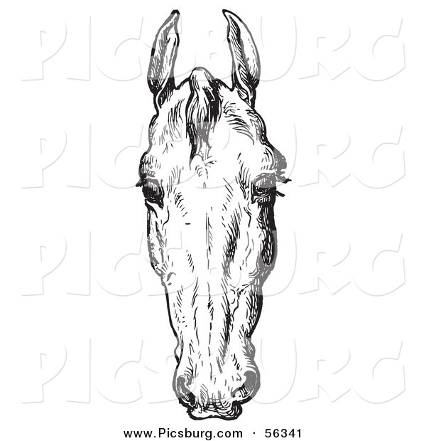 Clip Art of an Old Fashioned Vintage Engraved Horse Anatomy of a Bad Head in Black and White 2