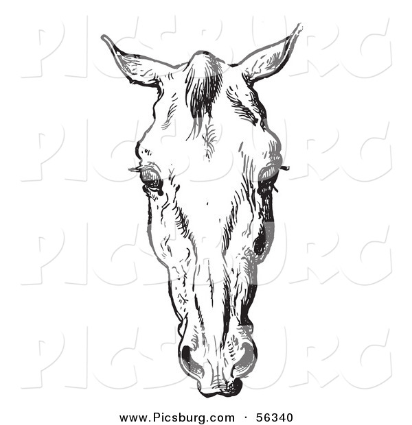 Clip Art of an Old Fashioned Vintage Engraved Horse Anatomy of a Bad Head in Black and White 3