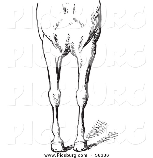 Clip Art of an Old Fashioned Vintage Engraved Horse Anatomy of Bad Conformations of the Fore Quarters in Black and White 3