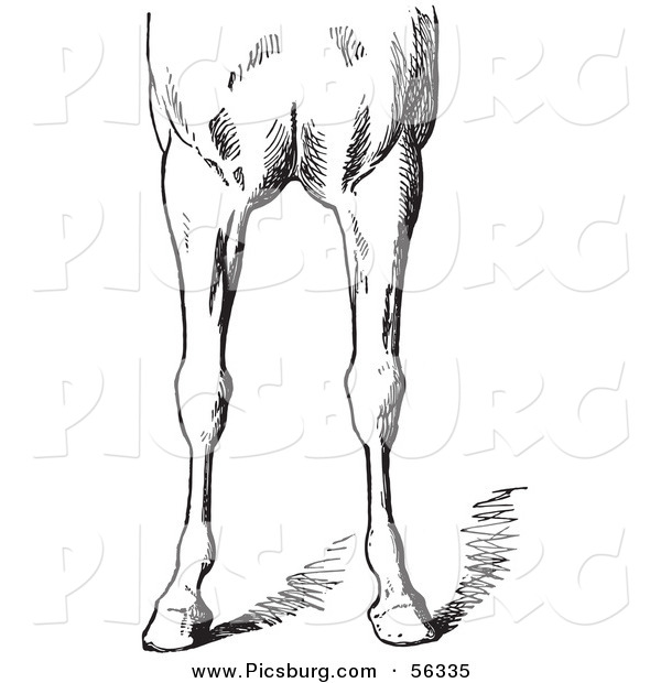 Clip Art of an Old Fashioned Vintage Engraved Horse Anatomy of Bad Conformations of the Fore Quarters in Black and White 4