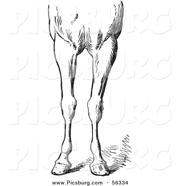 Clip Art of an Old Fashioned Vintage Engraved Horse Anatomy of Bad Conformations of the Fore Quarters in Black and White 5
