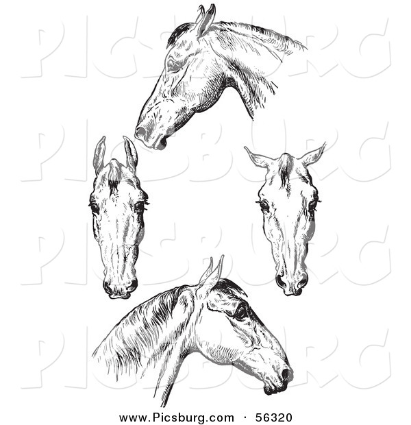 Clip Art of an Old Fashioned Vintage Engraved Horse Anatomy of Bad Heads in Black and White