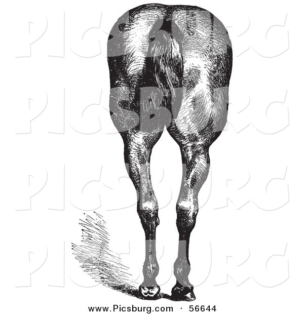 Clip Art of an Old Fashioned Vintage Engraved Horse Anatomy of Good Hind Quarters in Black and White 2