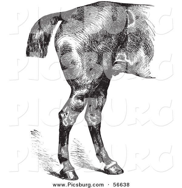 Clip Art of an Old Fashioned Vintage Engraved Horse Anatomy of Good Hind Quarters in Black and White