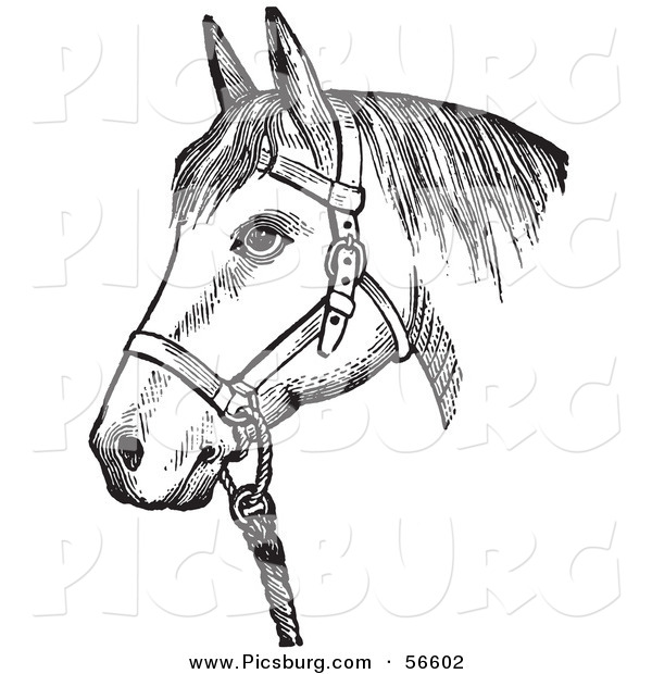 Clip Art of an Old Fashioned Vintage Horse with Good Form for a Halter of in Black and White