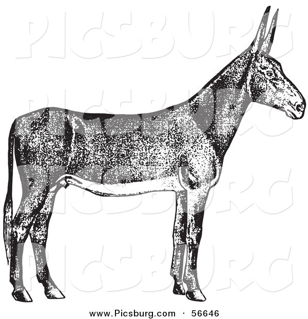 Clip Art of an Old Fashioned Vintage Poitou Donkey Ass in Black and White