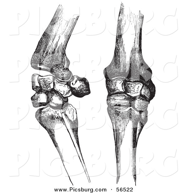 Clip Art of Two Horse Knee Bones and Joints - Black and White