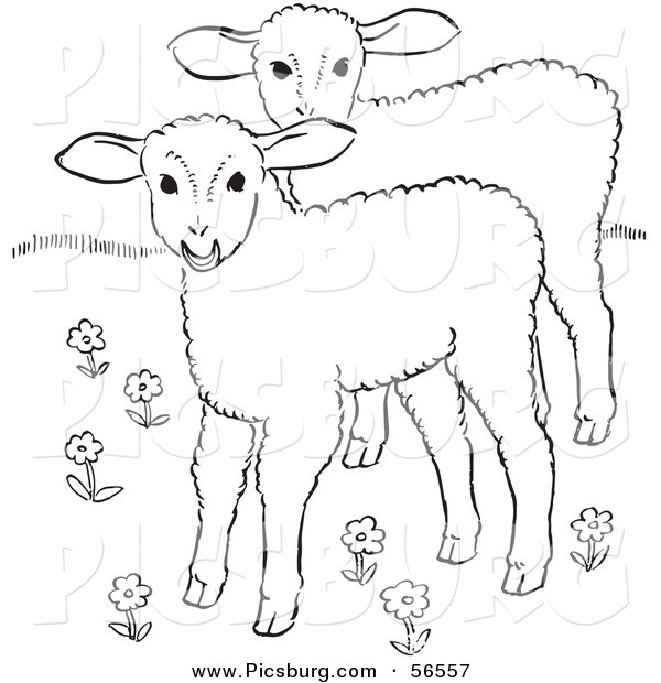 Clip Art of Two Lambs in a Flower Field - Black and White Line Art