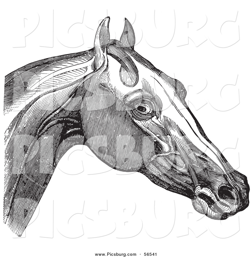 Clip Art Of A Retro Vintage Engraving Of Horses Head And Neck