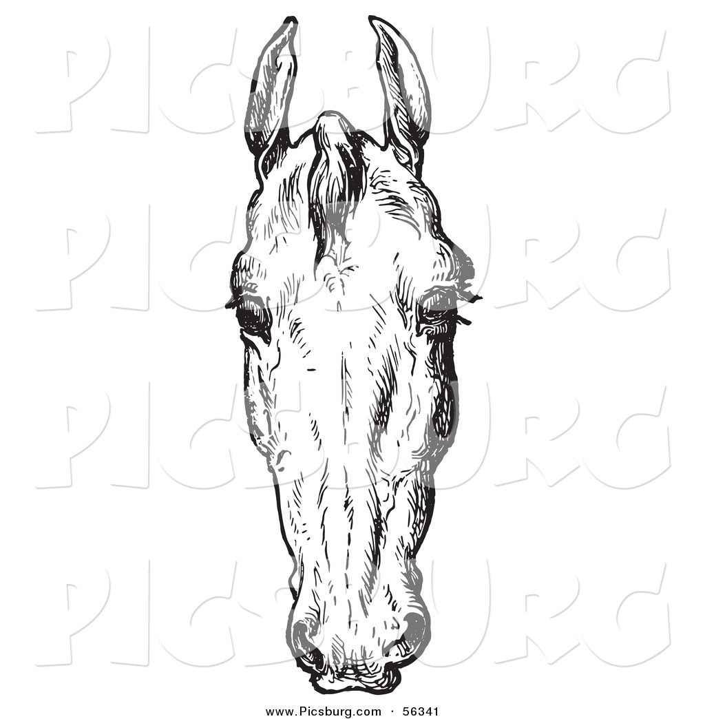Clip Art Of An Old Fashioned Vintage Engraved Horse Anatomy Of A Bad Head In Black And White 2 By Picsburg 56341