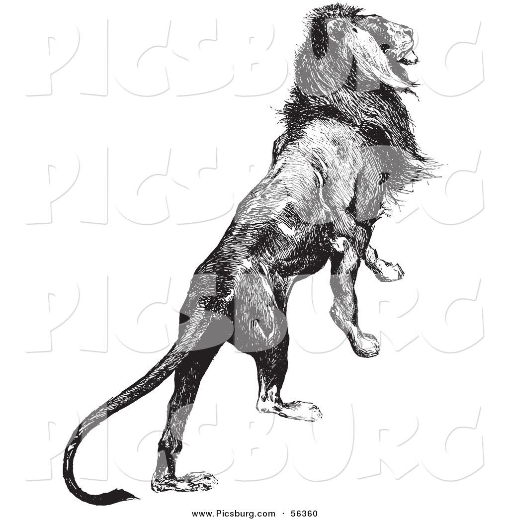 Lion Vector Collection Cartoon Clipart - FriendlyStock