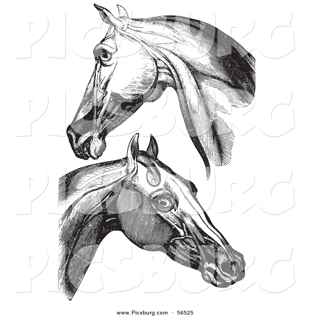 Clip Art of Horse Head and Neck Muscles - Black and White by ...