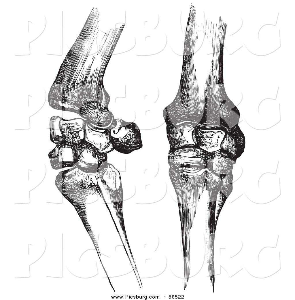 Clip Art of Two Horse Knee Bones and Joints - Black and White by ...